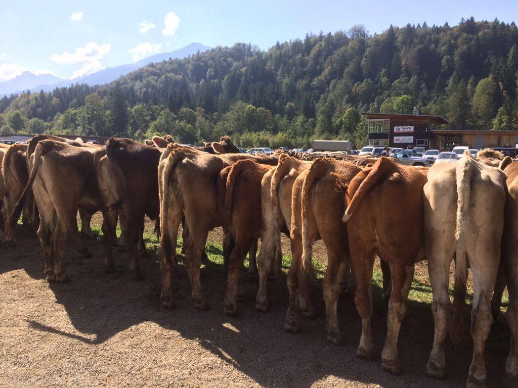 Ferienwohnung Viehscheid | Landhaus Barbara
